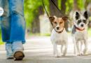 Собачья жизнь по-шведски