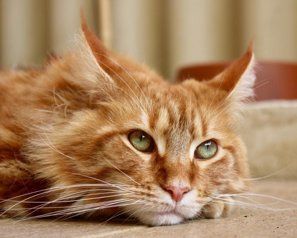 И целого мира много: исповедь кота-путешественника