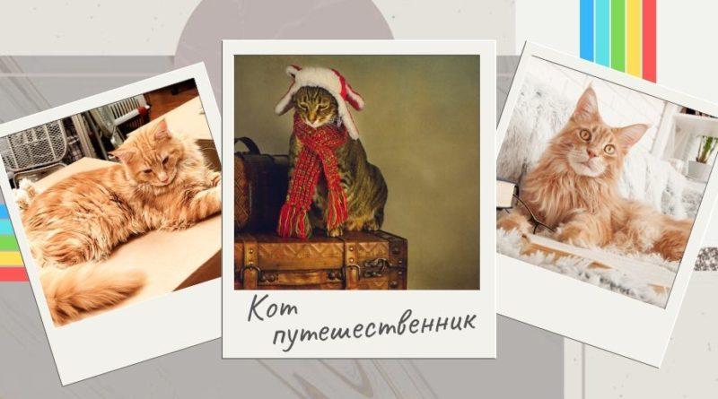 Исповедь кота путешественника